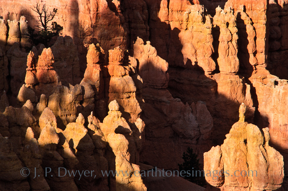 The combination of shadows and warm light, along with the lone tree on top of one of the spires intrigued me. This is sunset at Bryce Canyon.