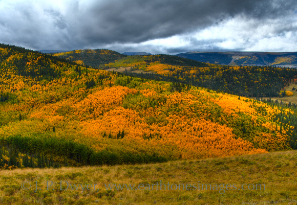 The hillside view in autumn in the La Garita Wilderness, CO.
