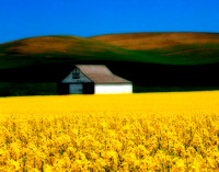 The colors and shapes of this scene in the Palouse just made a very satisfying image. Such images can be found all over the area.